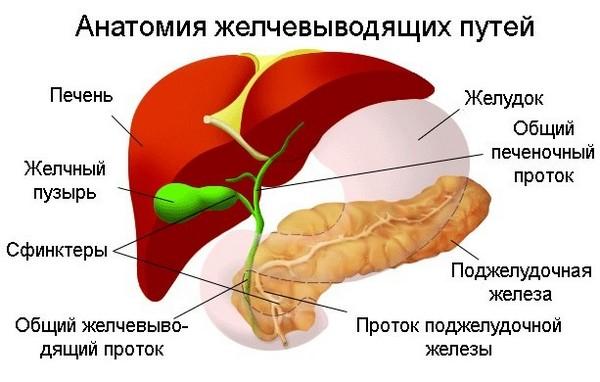 Дисплазия желчного пузыря что это thumbnail