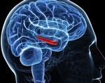 Аденома гипофиза: виды, причины, симптомы и лечение