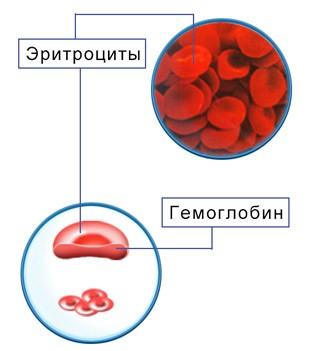 Среднее содержание гемоглобина в эритроците мснс