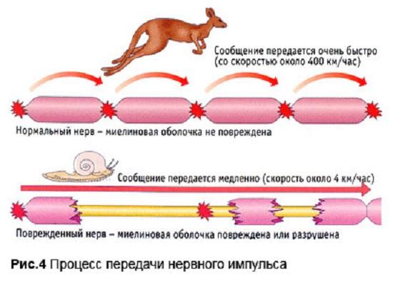 Особенности передачи нервного