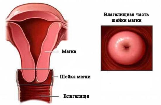 Влагалищная часть шейки матки: как ее видит при осмотре врач