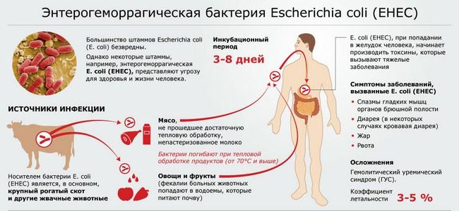 Энтерогеморрагическая бактерия