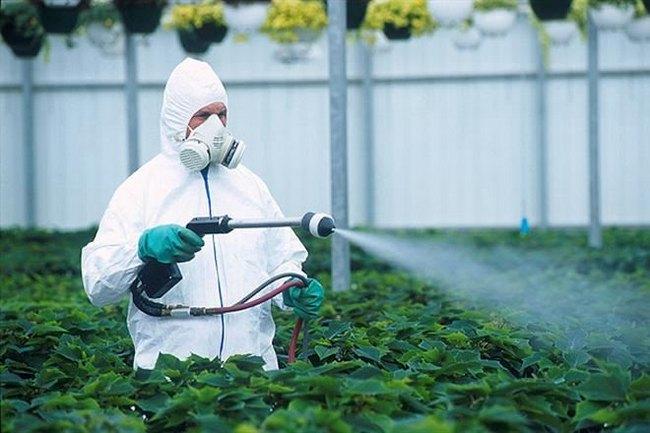 Лимфома средостения развивается у людей, работающих с пестицидами