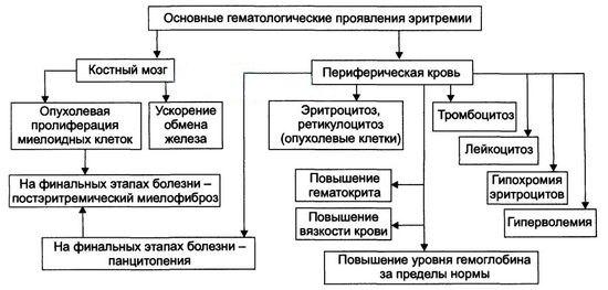 Основные гематологические проявления эритремии
