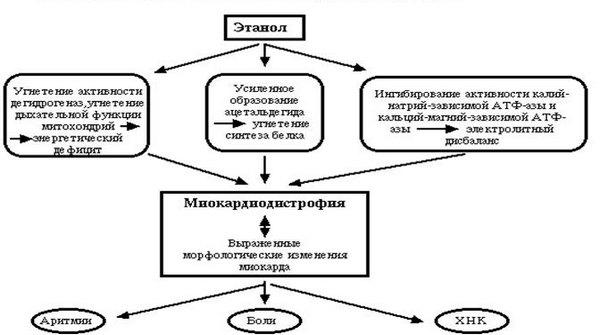 Патогенез алкогольной миокардиодистрофии