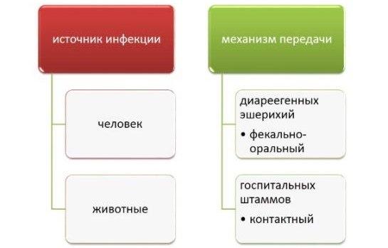 Источник и механизм передачи эшерихиоза
