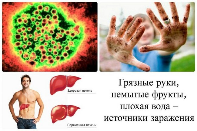 Источники заражения гепатитом Е