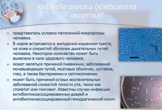 Клебсиелла окситока