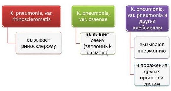 Роль клебсиелл в патологии человека
