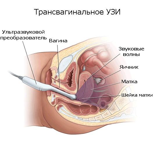 На какой неделе делают доплер при беременности