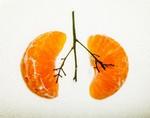 Пищевые волокна и здоровье легких: хорошо питаться, легко дышать