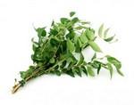 Рак поджелудочной железы можно вылечить экстрактом из дерева