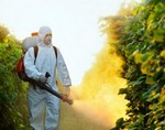 Новый метод выявил 57 пестицидов в отравленном пчелином меде