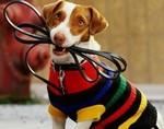 Выгуливание собак улучшает здоровье у пожилых людей