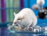 Вакцины от новых заболеваний благодаря ученым из MIT создаются за неделю