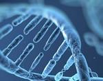 Ученые нашли в ДНК ген образования