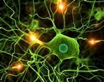 Ученые предполагают наличие в человеческом мозге тоннелей квантового типа