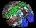 В мозге человека нашли сотню неисследованных участков
