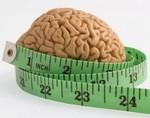 Американские ученые установили наличие в мозге гена, отвечающего за ожирение