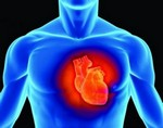 Ученые из Великобритании установили, что у 80% населения сердце старше, чем их фактический возраст