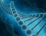Ученые выявили ген, который поможет предотвратить прогрессирование шизофрении и других психологических расстройств
