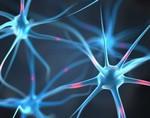 Ученые разработали препарат, который может восстанавливать нервные клетки