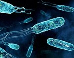 Победить рак предстательной железы могут морские бактерии
