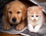 Коты провоцируют возникновение астмы у детей, а собаки защищают от нее