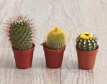 Комнатные растения могут быть опасны для здоровья