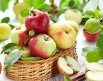 Яблоки и зелёные помидоры – натуральное средство против мышечной  атрофии