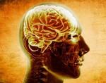 Инновационный мозговой имплантат сможет помочь при потере памяти