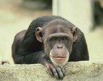 Найдено пролекарство для лечения вируса Эбола у обезьян