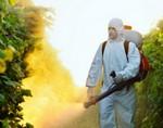Работа с пестицидами может привести к аномалии сперматозоидов
