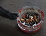 Курение вредит здоровью ваших питомцев