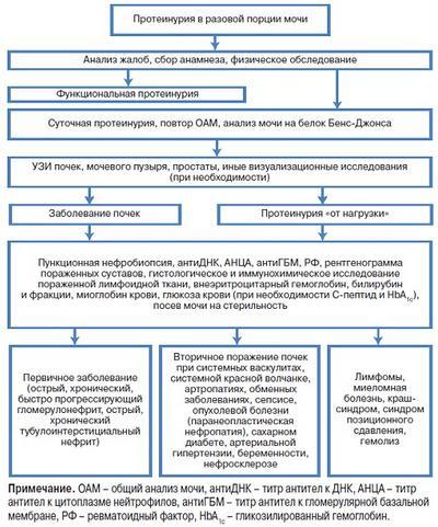 Дифференциальная диагностика протеинурии