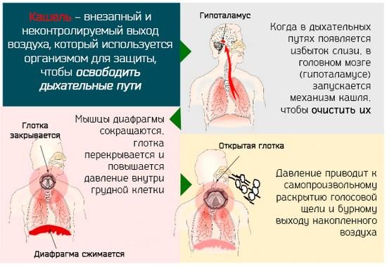 отметить, от сухости в горле начинается кашель до рвоты облегающего термобелья, уверяют