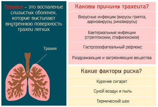 Трахеит – возможная причина боли в трахее при дыхании